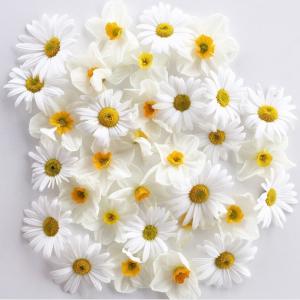 daisies325